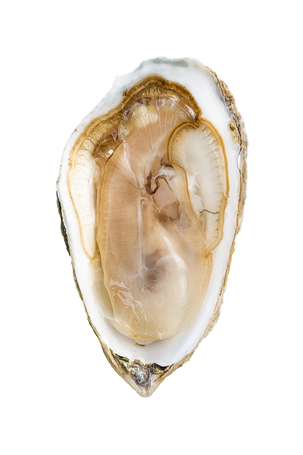 Nonesuch Oyster Meat