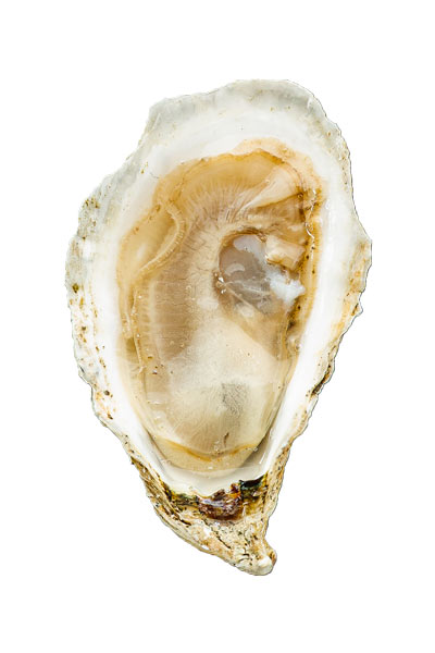 Chebeague Island Oyster Meat
