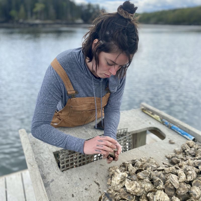 Meg Sorting Oysters at Cape Small