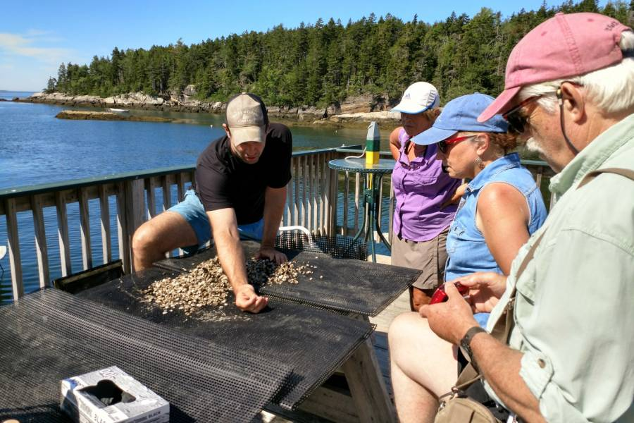 Learning about baby oyster growth and moving their bags